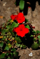 @ Copyright : NiMa - fotographics.ro